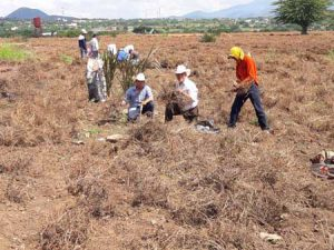 Hombres trabajando en el campo