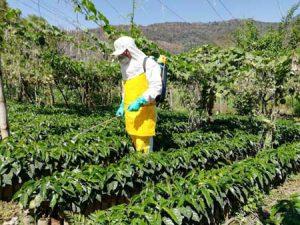 Hombre trabajando en agricultura